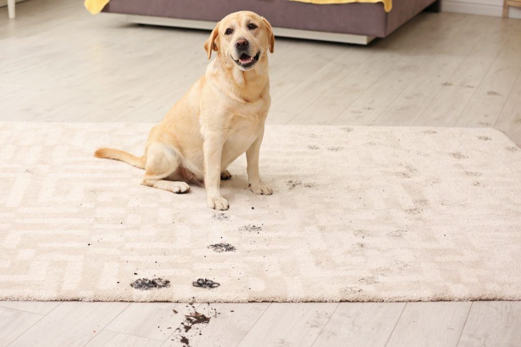 Best Rug Materials in a Home with Pets | Thornton Flooring